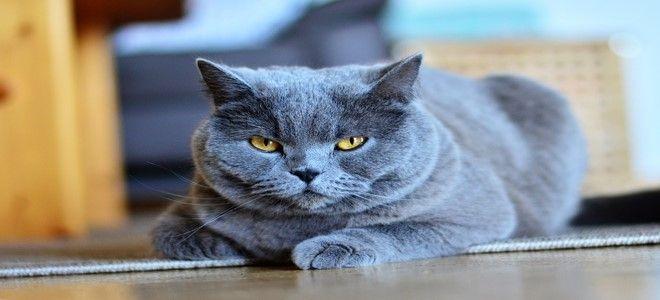 تفسير حلم القط في المنام