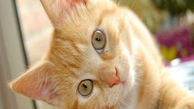 تفسير القطط في المنام