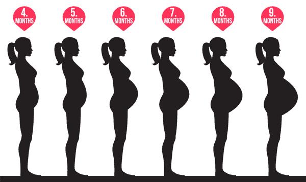 شكل البطن في شهور الحمل