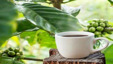 Photo of فوائد القهوة الخضراء للتخسيس للشعر للبشرة والأضرار