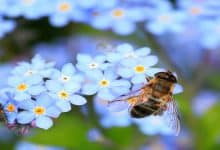 رؤيا النحل في الحلم لابن سيرين