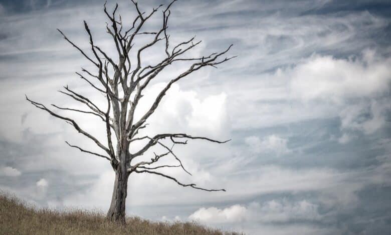 تفسير حلم رؤية الموت في المنام لابن سيرين للعزباء للمتزوجة للرجل